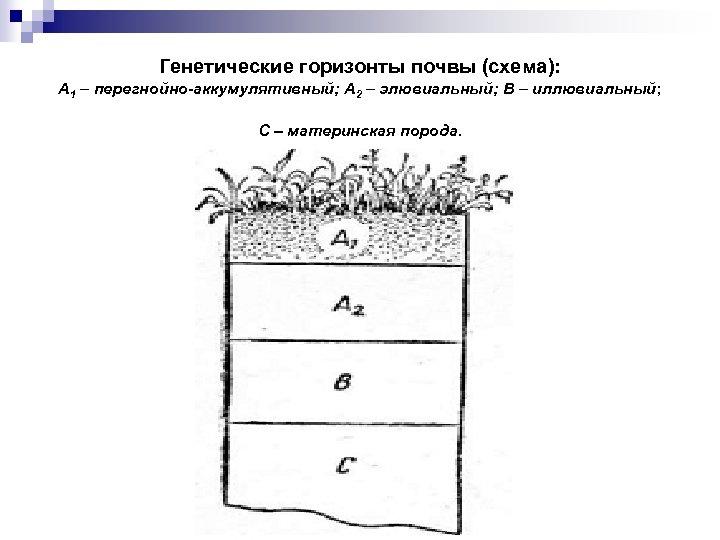 Генетические горизонты почвы (схема): A 1 – перегнойно-аккумулятивный; А 2 – элювиальный; В –