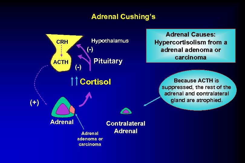Adrenal Cushing's Hypothalamus CRH (-) ACTH (-) Pituitary Cortisol (+) Adrenal adenoma or carcinoma