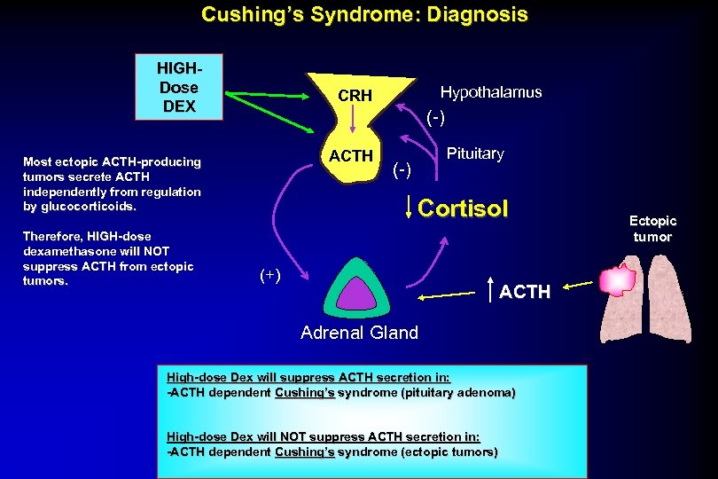 Cushing's Syndrome: Diagnosis HIGHDose DEX (-) ACTH Most ectopic ACTH-producing tumors secrete ACTH independently