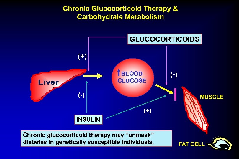 Chronic Glucocorticoid Therapy & Carbohydrate Metabolism GLUCOCORTICOIDS (+) BLOOD GLUCOSE (-) (+) INSULIN Chronic