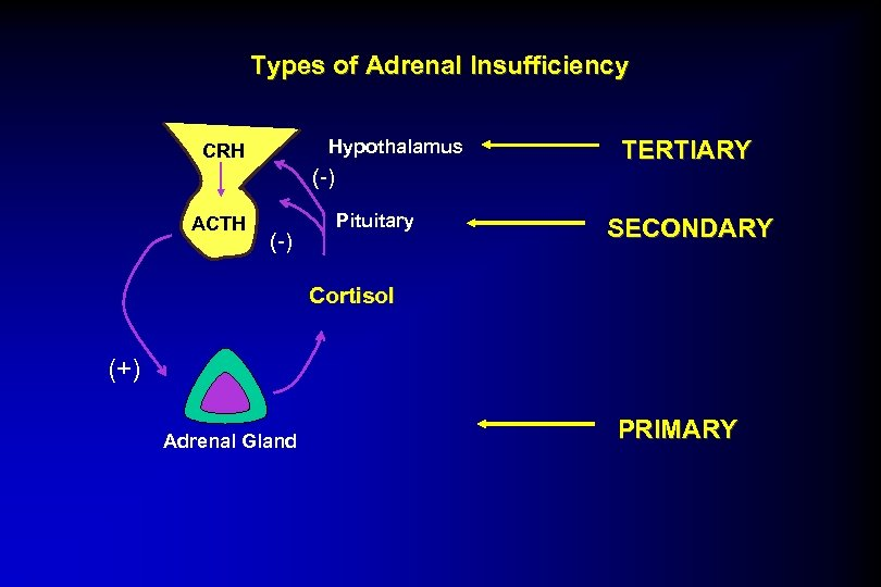 Types of Adrenal Insufficiency Hypothalamus CRH (-) ACTH (-) Pituitary TERTIARY SECONDARY Cortisol (+)