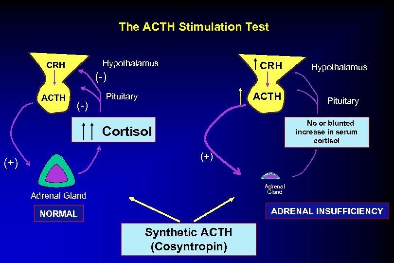 The ACTH Stimulation Test Hypothalamus CRH ACTH CRH (-) ACTH Pituitary Hypothalamus Pituitary No.
