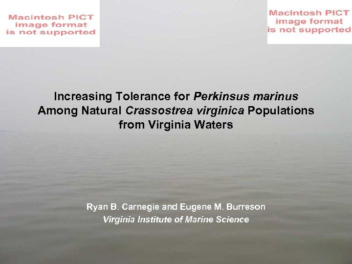 Increasing Tolerance for Perkinsus marinus Among Natural Crassostrea virginica Populations from Virginia Waters Ryan