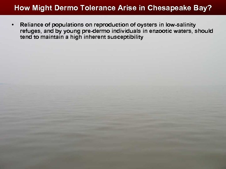 How Might Dermo Tolerance Arise in Chesapeake Bay? • Reliance of populations on reproduction