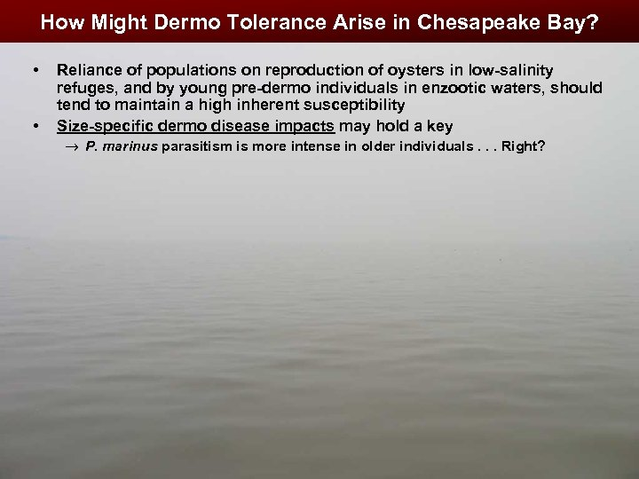 How Might Dermo Tolerance Arise in Chesapeake Bay? • • Reliance of populations on