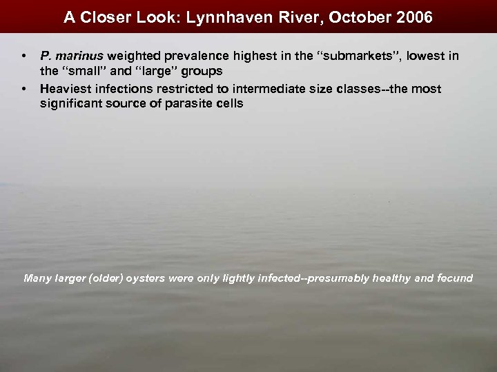 A Closer Look: Lynnhaven River, October 2006 • • P. marinus weighted prevalence highest