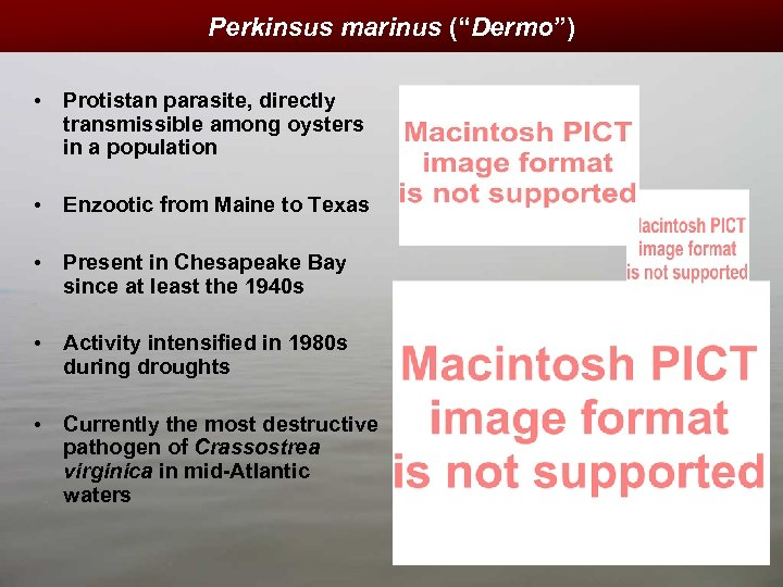 "Perkinsus marinus (""Dermo"") • Protistan parasite, directly transmissible among oysters in a population •"