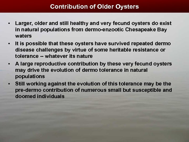 Contribution of Older Oysters • Larger, older and still healthy and very fecund oysters