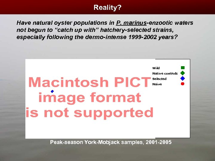 "Reality? Have natural oyster populations in P. marinus-enzootic waters not begun to ""catch up"