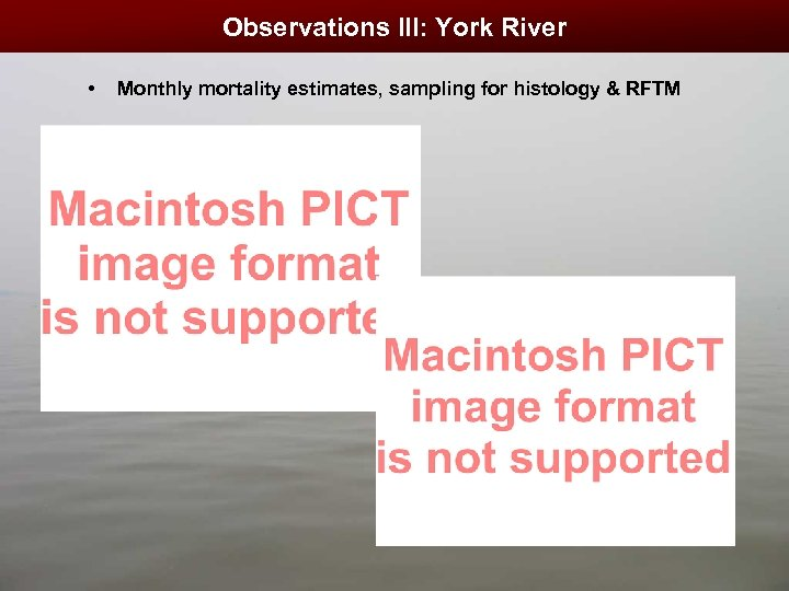 Observations III: York River • Monthly mortality estimates, sampling for histology & RFTM