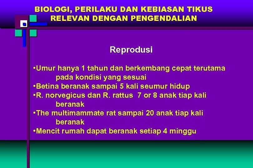 BIOLOGI, PERILAKU DAN KEBIASAN TIKUS RELEVAN DENGAN PENGENDALIAN Reprodusi • Umur hanya 1 tahun
