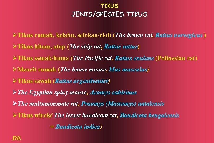 TIKUS JENIS/SPESIES TIKUS ØTikus rumah, kelabu, selokan/riol) (The brown rat, Rattus norvegicus ) ØTikus