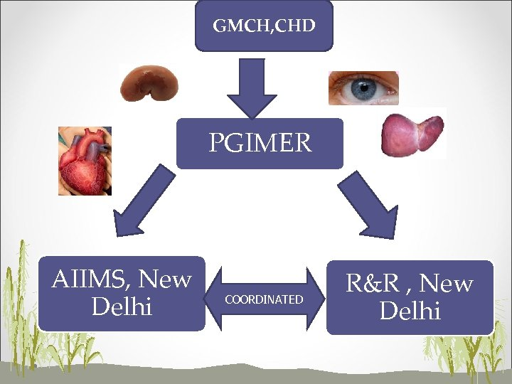 GMCH, CHD PGIMER AIIMS, New Delhi COORDINATED R&R , New Delhi
