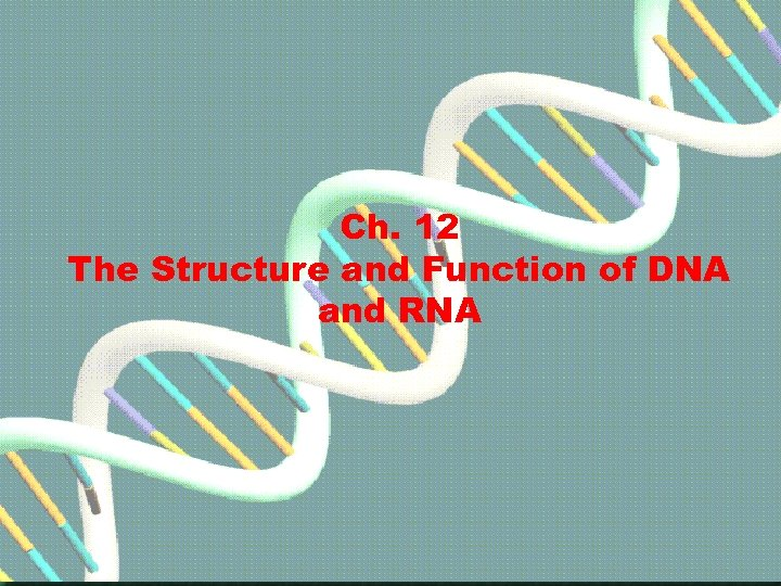 Ch. 12 The Structure and Function of DNA and RNA Go to Section: