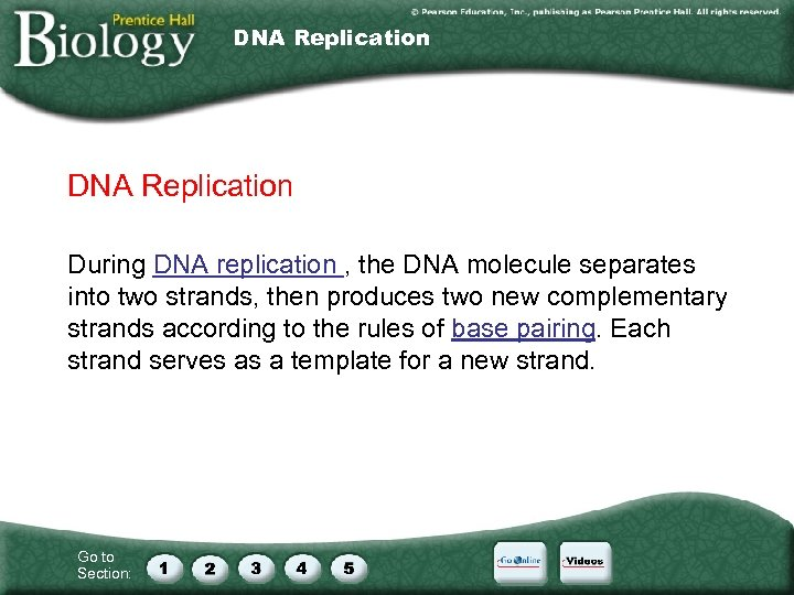 DNA Replication During DNA replication , the DNA molecule separates into two strands, then