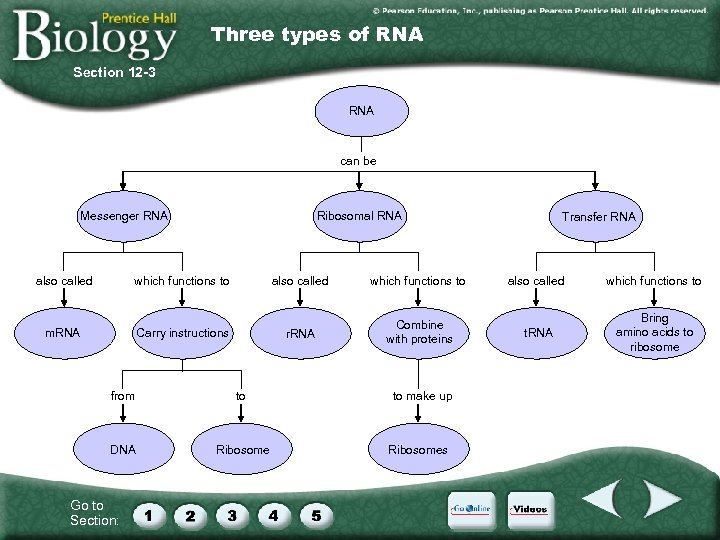 Three types of RNA Section 12 -3 RNA can be Messenger RNA also called