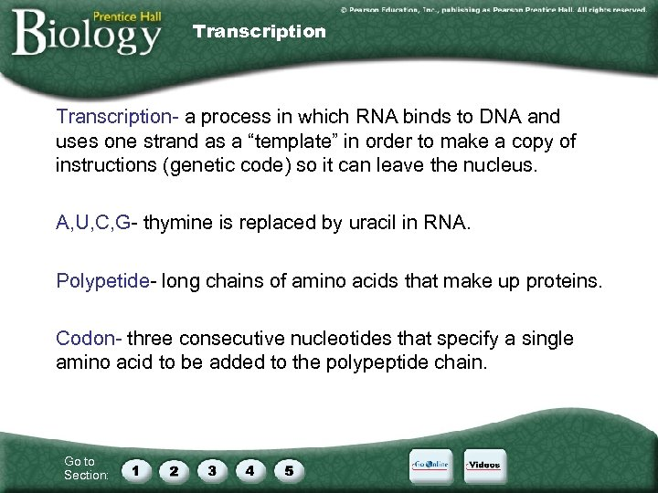 Transcription- a process in which RNA binds to DNA and uses one strand as