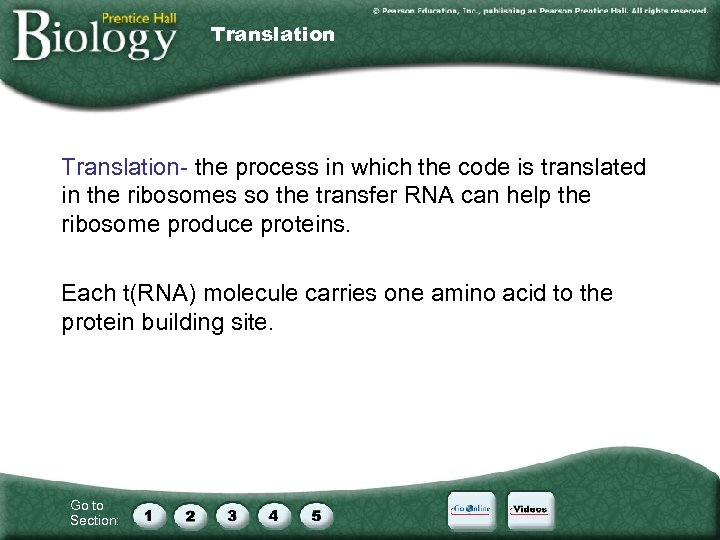 Translation- the process in which the code is translated in the ribosomes so the