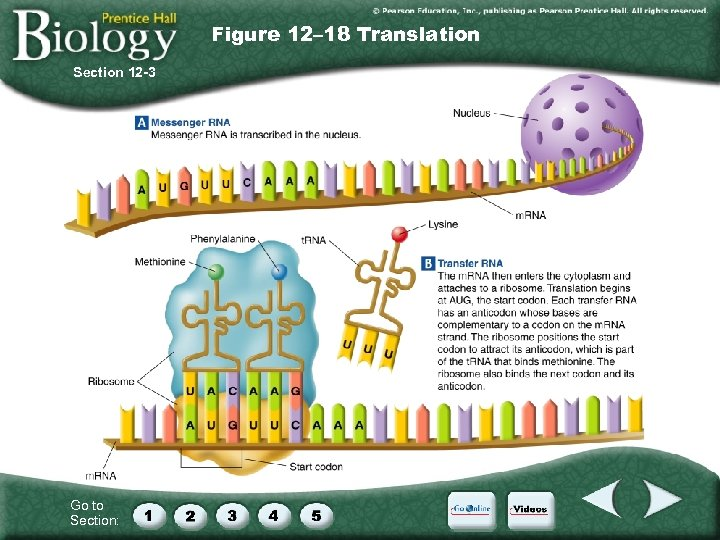 Figure 12– 18 Translation Section 12 -3 Go to Section: