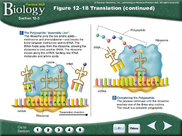 Figure 12– 18 Translation (continued) Section 12 -3 Go to Section: