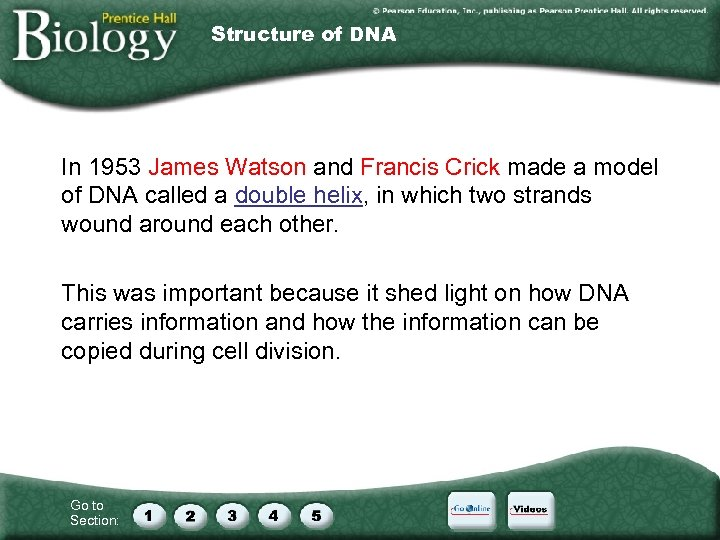 Structure of DNA In 1953 James Watson and Francis Crick made a model of