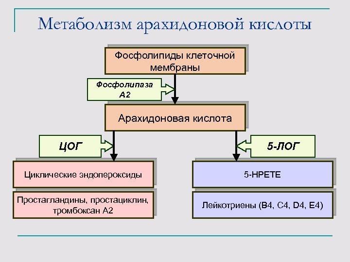Метаболизм арахидоновой кислоты Фосфолипиды клеточной мембраны Фосфолипаза А 2 Арахидоновая кислота ЦОГ 5 -ЛОГ