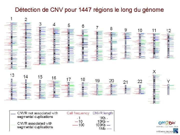 Détection de CNV pour 1447 régions le long du génome