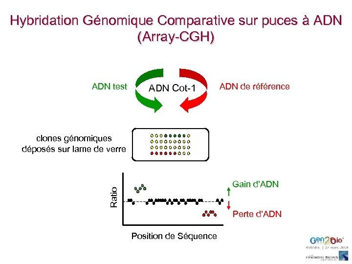 Hybridation Génomique Comparative sur puces à ADN (Array-CGH) ADN test ADN Cot-1 ADN de