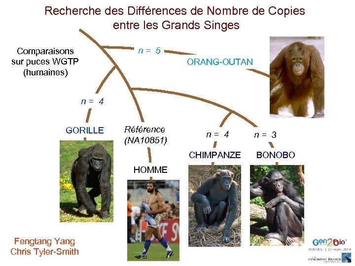 Recherche des Différences de Nombre de Copies entre les Grands Singes n= 5 Comparaisons