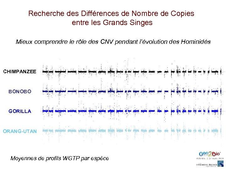 Recherche des Différences de Nombre de Copies entre les Grands Singes Mieux comprendre le