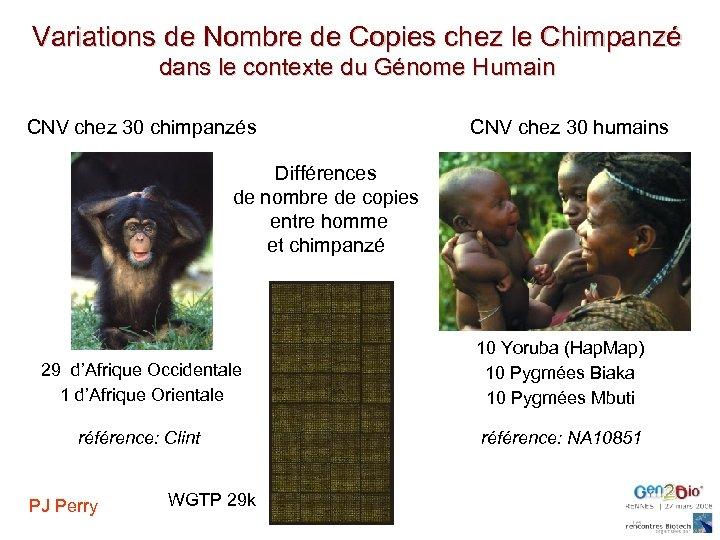 Variations de Nombre de Copies chez le Chimpanzé dans le contexte du Génome Humain