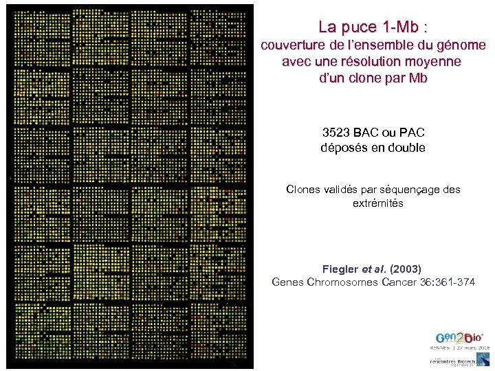 La puce 1 -Mb : couverture de l'ensemble du génome avec une résolution moyenne