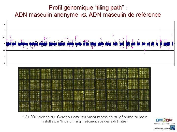"""Profil génomique """"tiling path"""" : ADN masculin anonyme vs. ADN masculin de référence ~"""