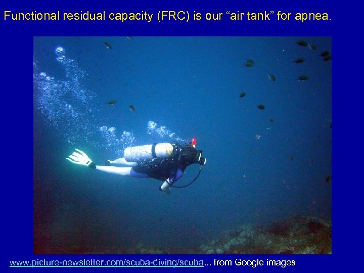 "Functional residual capacity (FRC) is our ""air tank"" for apnea. www. picture-newsletter. com/scuba-diving/scuba. ."