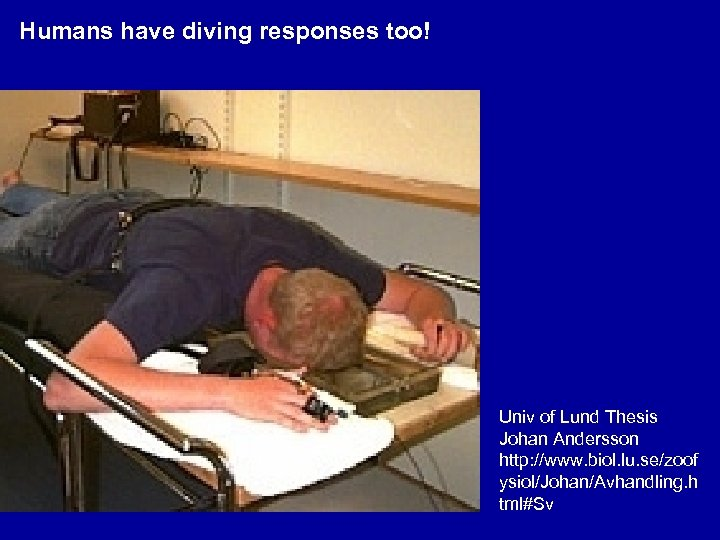 Humans have diving responses too! Univ of Lund Thesis Johan Andersson http: //www. biol.