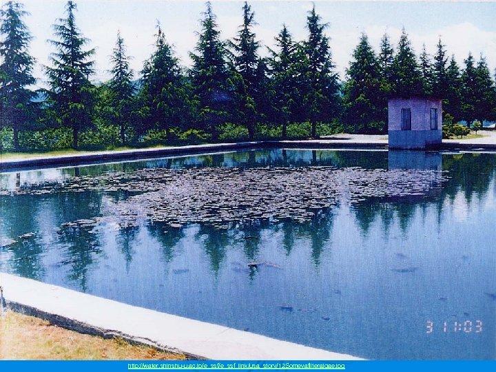 http: //water. shinshu-u. ac. jp/e_ssf_link/usa_story/12 Someyafilteralgae. jpg