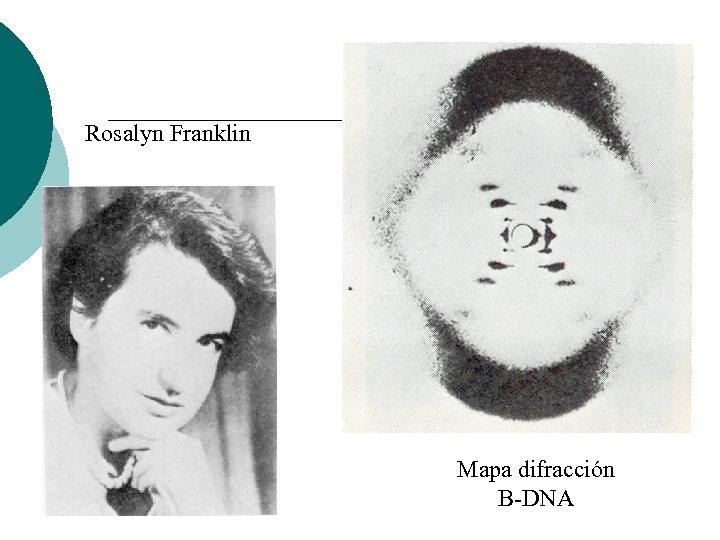 Rosalyn Franklin Mapa difracción B-DNA