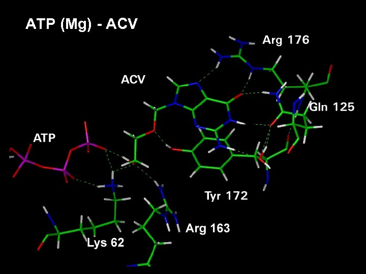ATP (Mg) - ACV