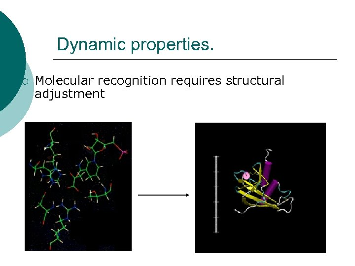 Dynamic properties. ¡ Molecular recognition requires structural adjustment