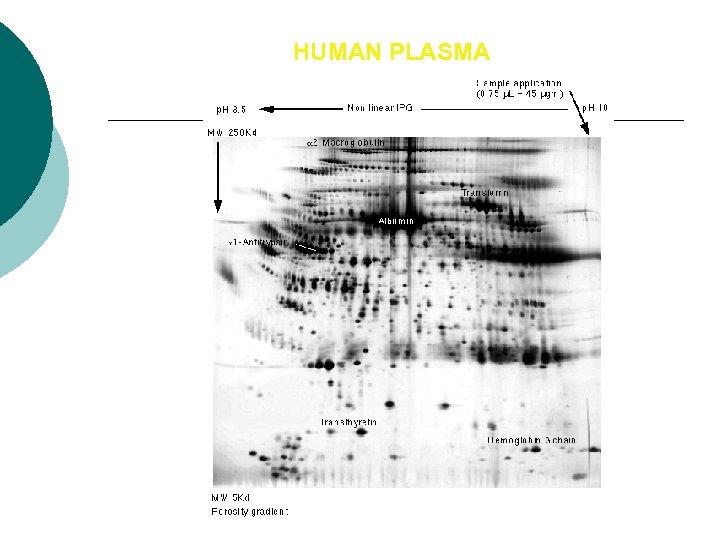 HUMAN PLASMA