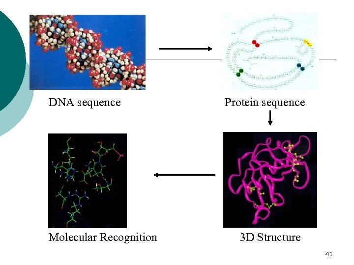 DNA sequence Molecular Recognition Protein sequence 3 D Structure 41