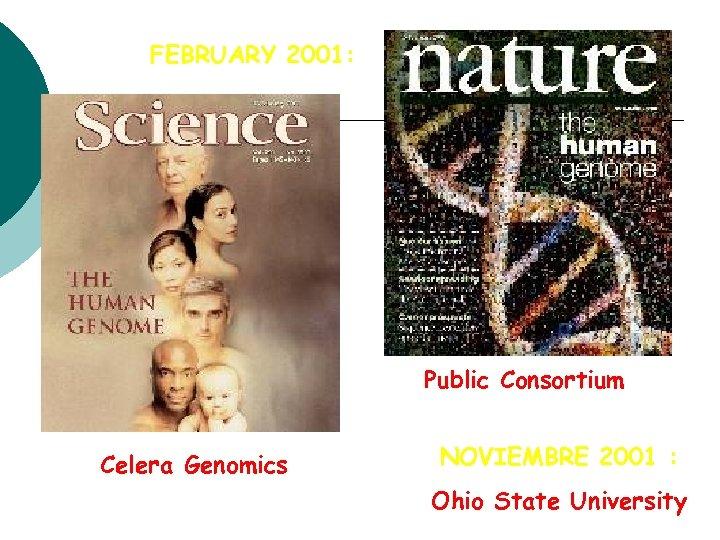 FEBRUARY 2001: Public Consortium Celera Genomics NOVIEMBRE 2001 : Ohio State University