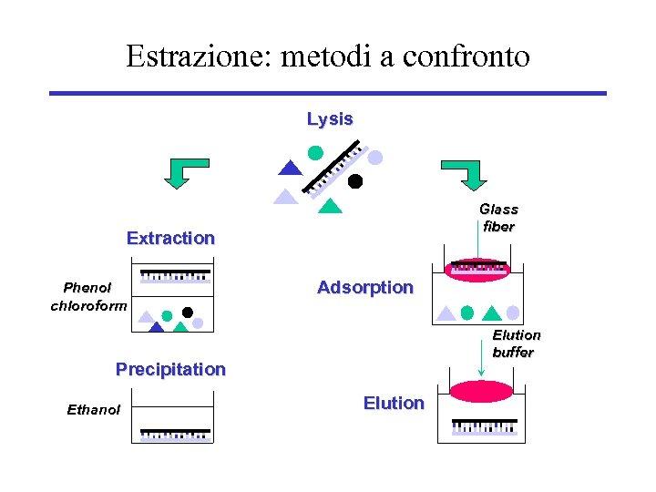 Estrazione: metodi a confronto Lysis Glass fiber Extraction Phenol chloroform Adsorption Elution buffer Precipitation