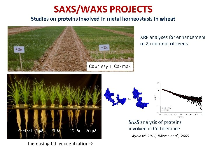 SAXS/WAXS PROJECTS Studies on proteins involved in metal homeostasis in wheat XRF analyses for