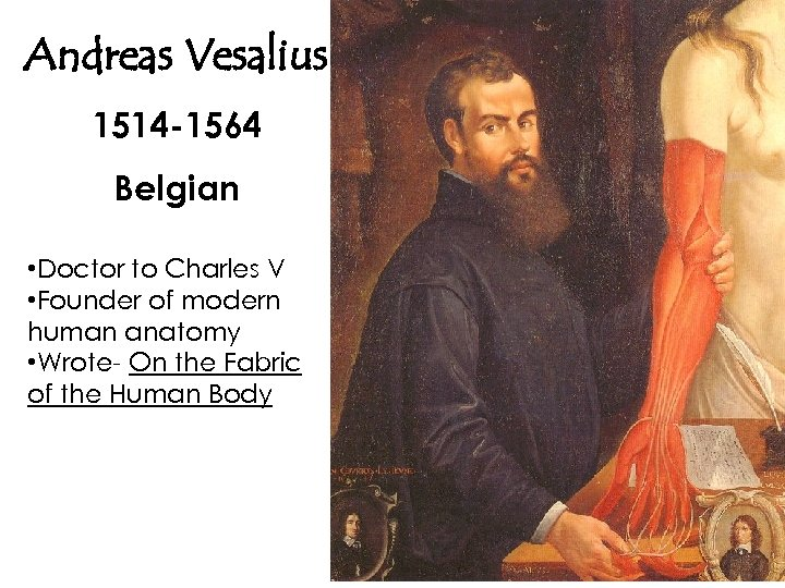 Andreas Vesalius 1514 -1564 Belgian • Doctor to Charles V • Founder of modern