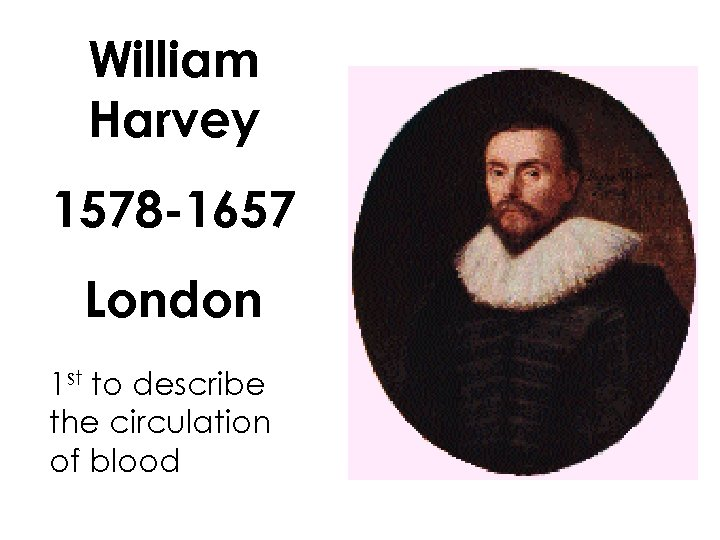 William Harvey 1578 -1657 London 1 st to describe the circulation of blood