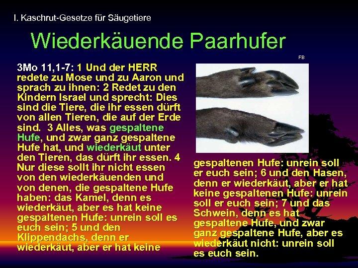 I. Kaschrut-Gesetze für Säugetiere Wiederkäuende Paarhufer FB 3 Mo 11, 1 -7: 1 Und