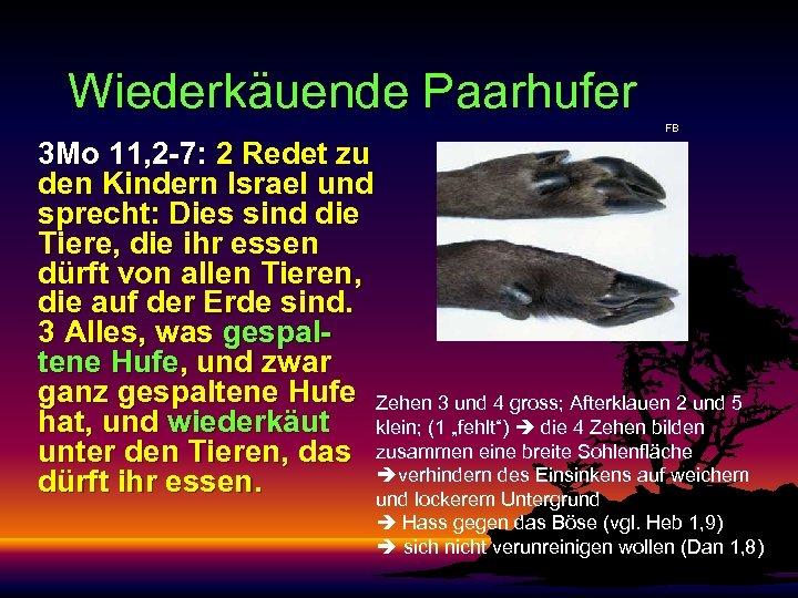 Wiederkäuende Paarhufer FB 3 Mo 11, 2 -7: 2 Redet zu den Kindern Israel
