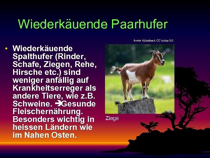 Wiederkäuende Paarhufer Armin Kübelbeck CC by/sa 3. 0 • Wiederkäuende Spalthufer (Rinder, Schafe, Ziegen,