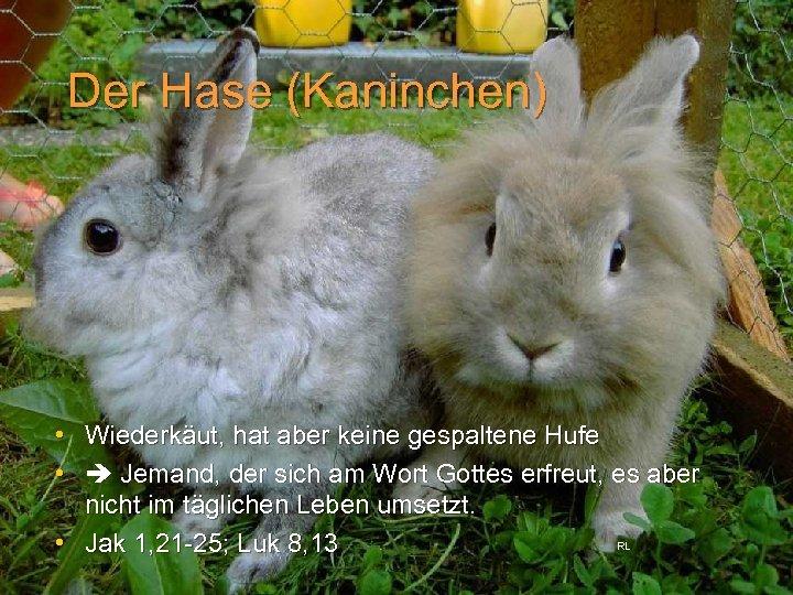 Der Hase (Kaninchen) • Wiederkäut, hat aber keine gespaltene Hufe • Jemand, der sich